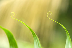 Foglia verde a spirale Immagini Stock