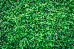 Foglia verde sugli ambiti di provenienza della natura Fotografia Stock