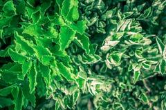 Foglia verde sugli ambiti di provenienza della natura Fotografie Stock