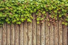 Foglia verde sul fondo di legno della struttura Immagini Stock Libere da Diritti