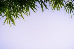 Foglia verde sul fondo vago della pianta Bella struttura della foglia in natura Sfondo naturale immagini stock