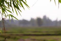 Foglia verde sul fondo vago della pianta Bella struttura della foglia in natura Sfondo naturale fotografia stock
