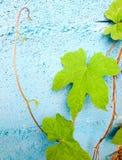 Foglia verde sulla parete blu Fotografia Stock Libera da Diritti