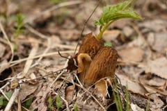 Foglia verde sviluppata attraverso il fungo fotografia stock