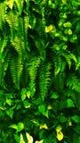 Foglia verde tropicale Fotografie Stock