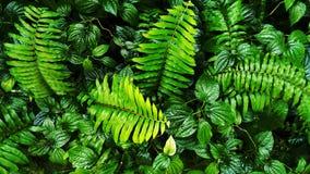 Foglia verde tropicale Fotografie Stock Libere da Diritti