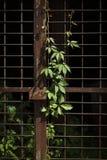 Fogliame Fotografia Stock