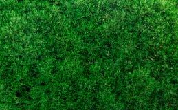 fogliame Fotografie Stock