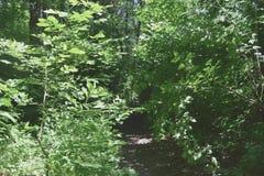 Fogliame degli alberi della steppa Fotografia Stock