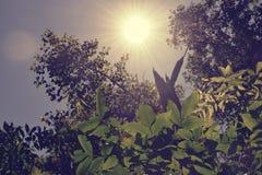 Fogliame degli alberi della steppa Fotografie Stock