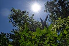 Fogliame degli alberi della steppa Fotografia Stock Libera da Diritti