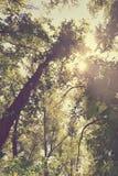 Fogliame degli alberi della steppa Immagine Stock Libera da Diritti