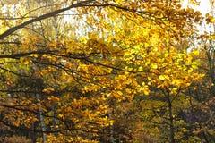 Fogliame degli alberi di autunno Fotografia Stock Libera da Diritti