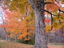Fogliame del New Hampshire Fotografia Stock