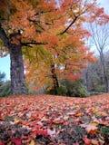Fogliame del New Hampshire Immagine Stock