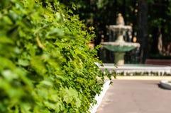 Fogliame del parco della fontana Fotografia Stock Libera da Diritti