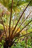 Fogliame della giungla Fotografia Stock