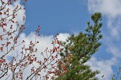 Fogliame 11 della primavera Fotografia Stock Libera da Diritti