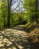 Fogliame della primavera & sole, Hwy 32, NC immagini stock libere da diritti