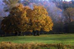 1 fogliame di autunno immagini stock