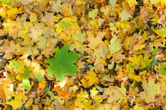 Fogliame di autunno Fotografie Stock Libere da Diritti