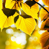 Fogliame di autunno Fotografia Stock