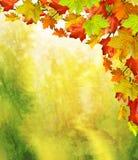 Fogliame di autunno Autunno dorato Fotografia Stock Libera da Diritti