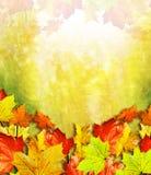 Fogliame di autunno Autunno dorato Fotografia Stock