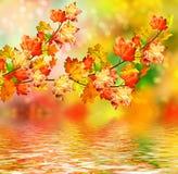Fogliame di autunno Autunno dorato Fotografie Stock Libere da Diritti