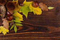 Fogliame di autunno con le castagne Fotografie Stock Libere da Diritti