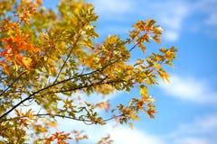 Fogliame di autunno contro Immagini Stock