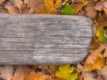 Fogliame di autunno e bordo anziano Immagini Stock