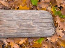 Fogliame di autunno ed il bordo anziano Fotografie Stock