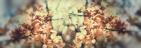 Fogliame di autunno - foglie di autunno Fotografie Stock