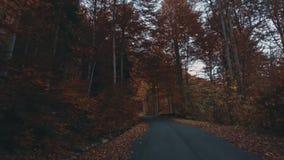 Fogliame di autunno in foresta con la strada stock footage