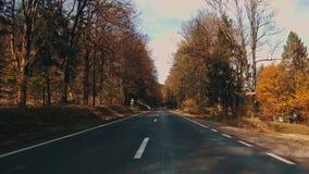 Fogliame di autunno in foresta con la strada archivi video