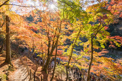 Fogliame di autunno in Korankei, Aichi, Giappone Fotografia Stock