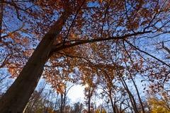 Fogliame di autunno la foresta Fotografia Stock Libera da Diritti