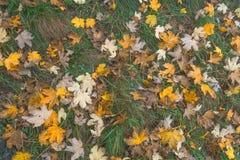 Fogliame di autunno nei campi immagine stock