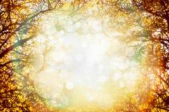 Fogliame di autunno sugli alberi sopra la luce del sole in giardino o in parco Fondo vago della natura di caduta Immagine Stock Libera da Diritti