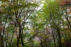 Fogliame di autunno in un parco della città Fotografia Stock