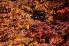 Fogliame di autunno in un parco della città Immagine Stock Libera da Diritti
