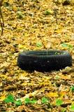 Fogliame di autunno in un parco della città con una gomma Immagine Stock
