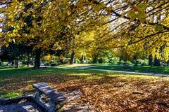 Fogliame di autunno in un parco pubblic a Torino Piemonte, Italia fotografia stock libera da diritti
