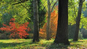 Fogliame di caduta in anticipo Autumn Trees Fotografie Stock