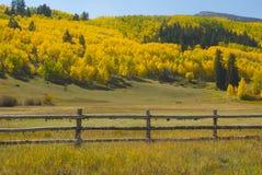 Fogliame di caduta in Colorado Fotografia Stock Libera da Diritti