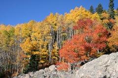 Fogliame di caduta in Colorado Fotografie Stock Libere da Diritti
