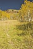 Fogliame di caduta del Colorado Fotografie Stock Libere da Diritti