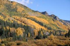 Fogliame di caduta del Colorado Fotografie Stock