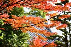 Fogliame di caduta del Giappone Immagine Stock